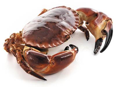 Crab_Brown
